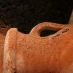 Fühlt sich sichtlich wohl: Tropiocolotes Steudneri auf der Tonvase