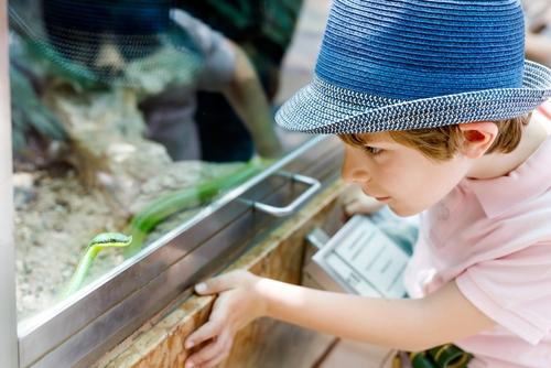 Ein kleiner Jung schaut durch eine Glasscheibe in ein Terrarium