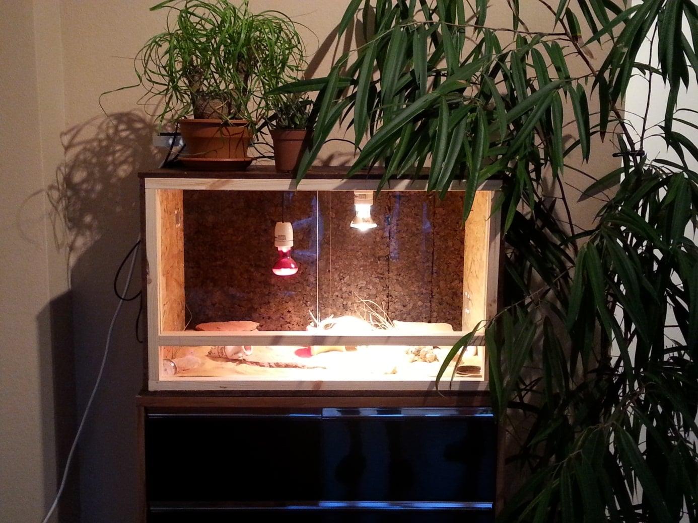 zwerggecko-terrarium