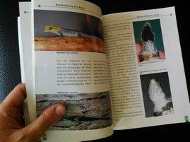 lygodactylus-beate-roell