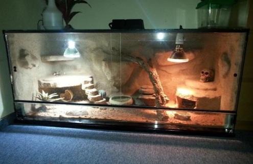 Terrarium für die Haltung von Leopardgeckos