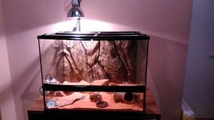 Exo Terra Terrarium für Zwerggeckos, fertig eingerichtet