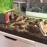 Terrarium mit Achatschnecken