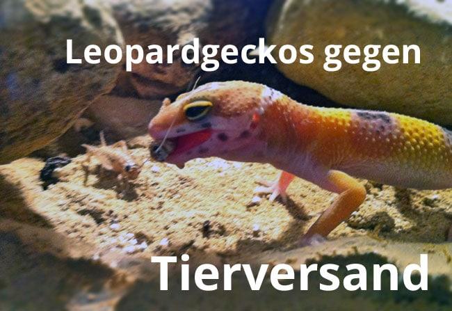 reptilien online kaufen? leopardgeckos gegen tierversand