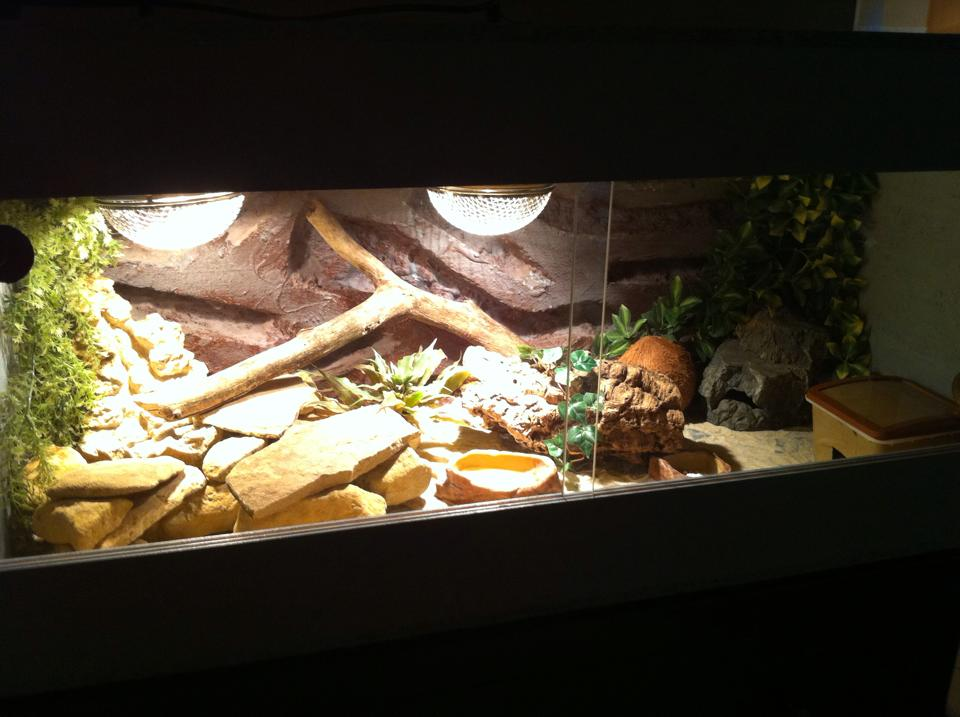 leopardgecko haltung im terrarium. Black Bedroom Furniture Sets. Home Design Ideas