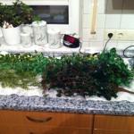 Kunstpflanzen für ein Leopardgecko-Terrarium