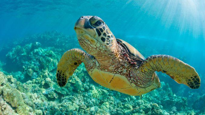 Schildkröten