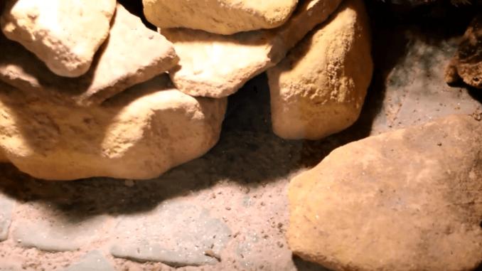 Der ideale Bodengrund für Leopardgeckos