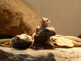Wie überwintern Reptilien und Amphibien?