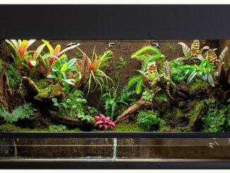 Ein voll eingerichtetes Regenwaldterrarium aus Glas