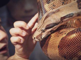 Ein Kind fasst eine Schlange mit dem Zeigefinger an