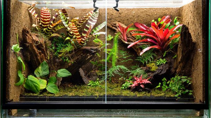 Tropenterrarium für Frösche, Eidechsen oder Geckos mit üppiger Bepflanzung